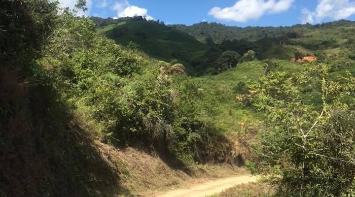 REALIZACION DE LIMPIEZA DE LA MALEZA EN LAS VIA CHITO , TRES AGUAS, NUEVO PARAISO